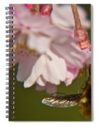 Bee Fly Feeding 8 Spiral Notebook