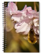 Bee Fly Sucking Nectar 1 Spiral Notebook
