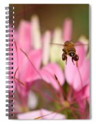 Bee In Flight Over Cleome Flower Spiral Notebook