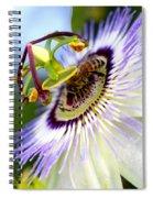 Bee On A Nigella Spiral Notebook
