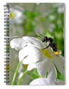 Bee On Primrose Spiral Notebook