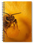 Bee On Squash Flower Spiral Notebook