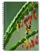 Bee Time Spiral Notebook