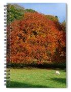 Beech Tree, Glendalough, Co Wicklow Spiral Notebook