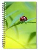 Beetle Butt Spiral Notebook