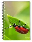 Beetle Spiral Notebook
