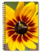 Beeutiful Spiral Notebook