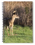 Being Aware - Deer Spiral Notebook