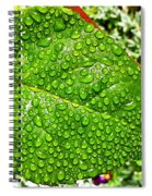 Bejewelled By Rain  Spiral Notebook