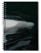 Beluga Impressions 3 Spiral Notebook