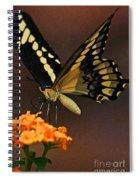Beneath My Wing Spiral Notebook