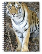 Bengal Tiger In Pench National Park Spiral Notebook