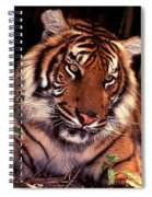 Bengal Tiger In Thought Spiral Notebook