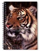 Bengal Tiger Watching Prey Spiral Notebook