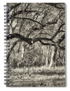 Bent Trees Sepia Toned Spiral Notebook