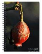 Bent Spiral Notebook