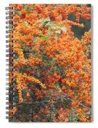 Berry Orange Spiral Notebook
