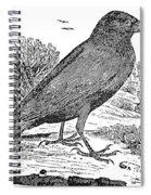 Bewick: Raven Spiral Notebook