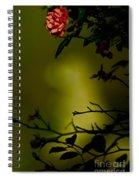 Beyond The Rose Spiral Notebook