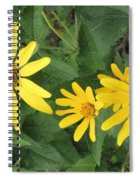 Big And Small Spiral Notebook
