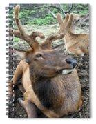 Big Fella Spiral Notebook