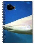 Big Fish Little Fish Spiral Notebook