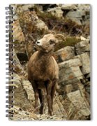 Big Horn On The Rocks Spiral Notebook