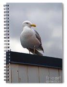 Big Seagull Spiral Notebook
