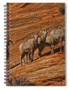 Bighorn Sheep, Zion National Park, Utah Spiral Notebook