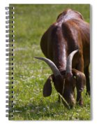 Billy Goat Or Nanny Goat  Spiral Notebook
