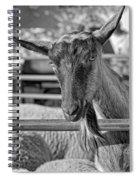 Billy The Ham Monochrome Spiral Notebook
