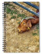 Billy's Escape Spiral Notebook