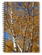 Birch Beauty Spiral Notebook