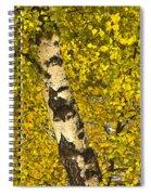 Birch Forest In Finland Spiral Notebook