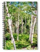 Birch Path Spiral Notebook