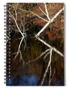 Birch Reflections Spiral Notebook