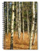 Birch Tree Abstract Spiral Notebook