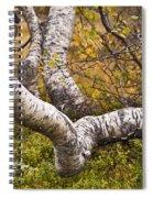 Birch Trees In Autumn Foliage Spiral Notebook