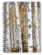 Birch Trees No.0644 Spiral Notebook