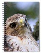 Bird - Red-tailed Hawk - Bashful Spiral Notebook