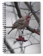 Bird And Berry 3 Spiral Notebook