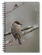 Bird - Eastern Phoebe - Very Contented Spiral Notebook
