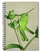 Bird Grasshopper Nymph Spiral Notebook