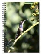 Bird - Hummingbird - The Observer Spiral Notebook