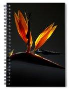 Bird Of Paradise 3 Spiral Notebook