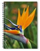 Bird Of Paradise Spiral Notebook
