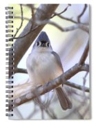 Bird - Tufted Titmouse - Busted Spiral Notebook