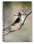 Bird - Tufted Titmouse - Wind Rider Spiral Notebook