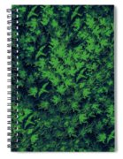 Birds In Green Spiral Notebook