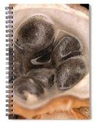 Birds Nest Fungus Spiral Notebook